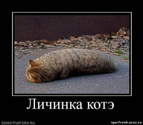 http://igorfresh.ucoz.ru/_ph/3/128555978.jpg
